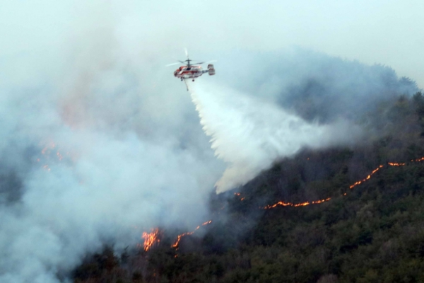 Fire in Busan burns 20 ha of forest in two days