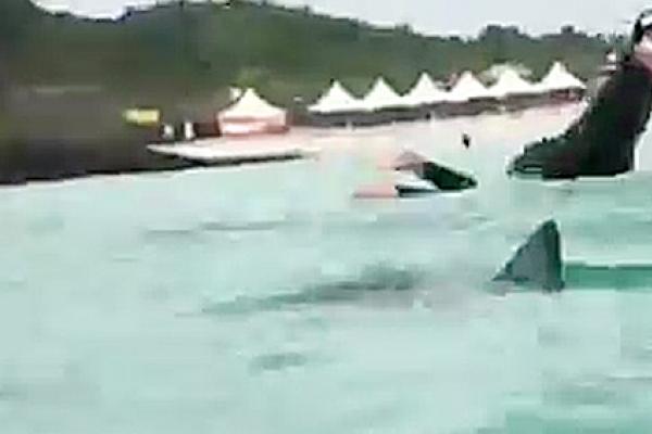 Jeju shark warning closes Hamdeok Beach