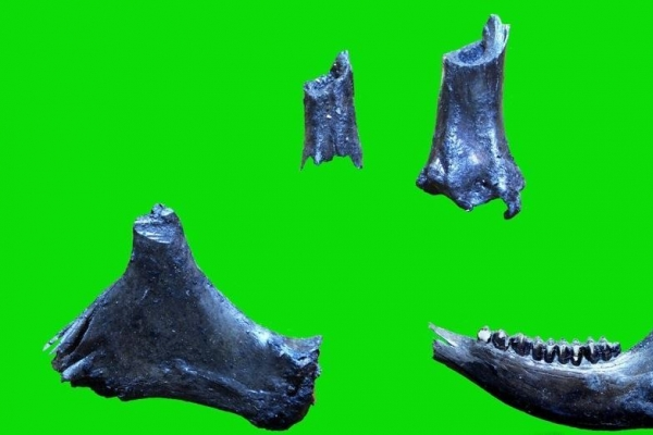 Relics of Paleolithic era found in N. Korea's southwest