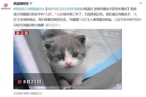 中 최초로 고양이 복제 성공…'1마리에 4천만원' 상업화 계획