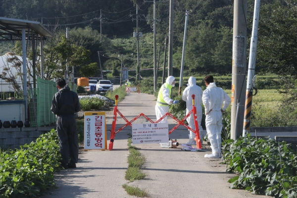 South Korea rushes to stem spread of African swine fever