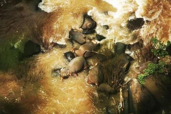 새끼 구하려다…태국 국립공원 폭포서 코끼리 6마리 '떼죽음'
