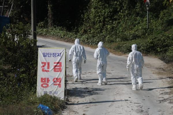 7th case of African swine fever in wild boar found near inter-Korean border