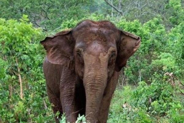 칠레의 마지막 '서커스 코끼리' 브라질서 새 보금자리 찾아