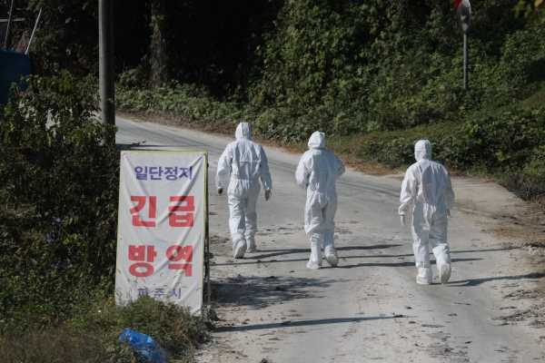 S. Korea to set up fences from east to west to prevent spread of ASF