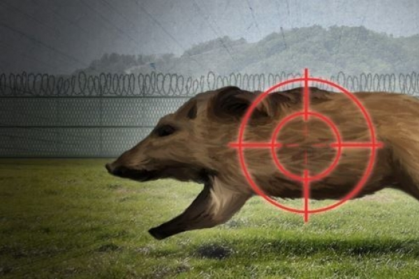 S. Korea holds search operation for ASF-infected wild boars