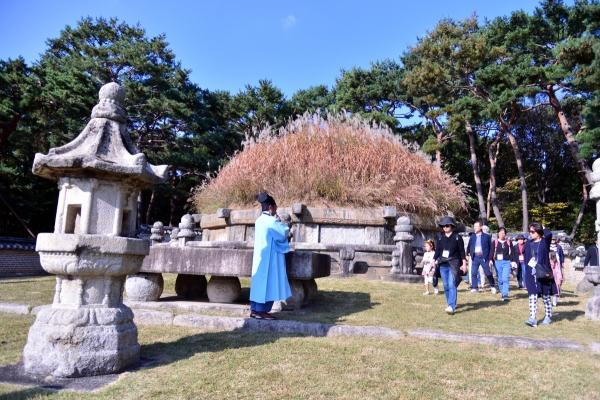 [Eye Plus] Silver grass waving on royal tomb of King Taejo