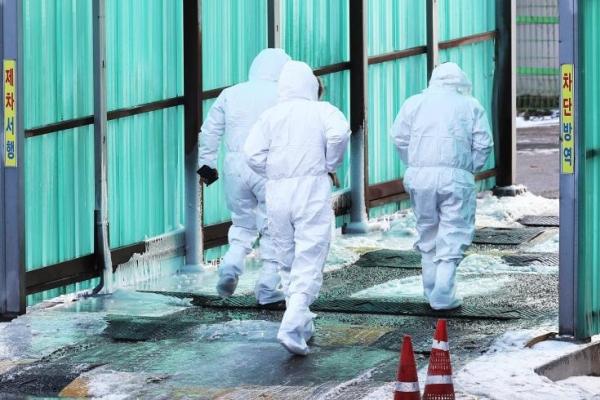 [Newsmaker] S. Korea investigating 3 suspected cases of highly pathogenic bird flu