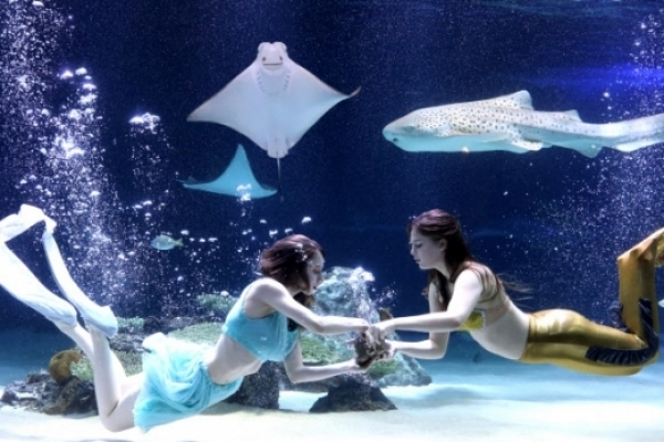 S. Korea to revamp rules on aquariums to better protect animal rights