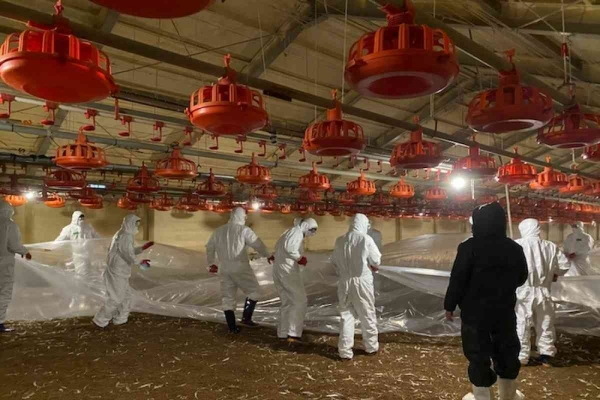 S. Korea reports 1 new highly pathogenic bird flu case