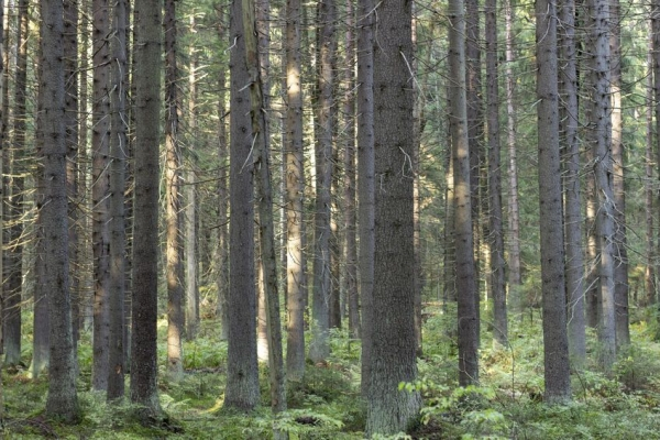 NPS commits $150m to global timberland in push for diversification