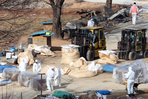 S. Korea investigating new suspected bird flu case, total now at 101