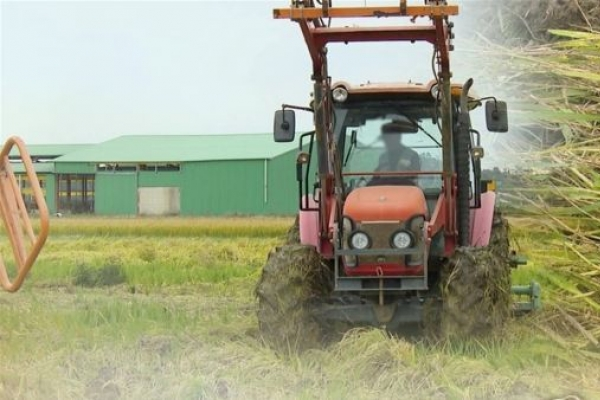 Rice production costs up 6.5% last year
