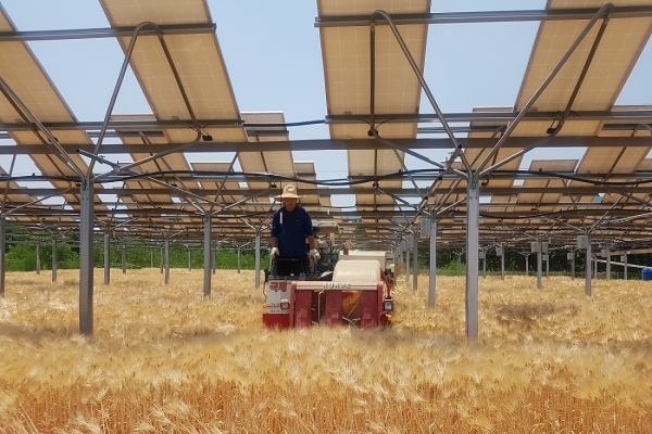 Hanwha to study building solar panels above crops