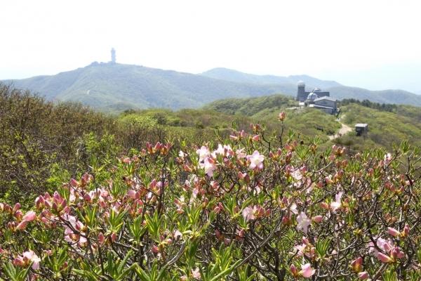 Sobaeksan's floral beauty in full bloom