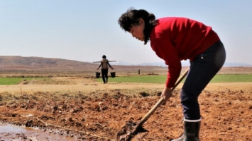 North Korea again designated as food-deficit nation by FAO