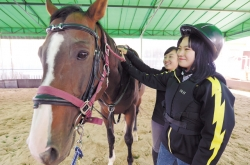 Riding helps heal strained teens