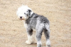 Missing dog found slaughtered, eaten