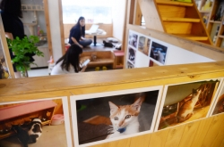 [Weekender] Special cafe for rescued cats offers chance for adoption