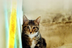 [Weekender] Stature of cats 'catapults' in Korea