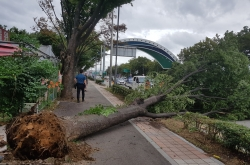 3 dead amid hundreds of accidents due to Typhoon Lingling