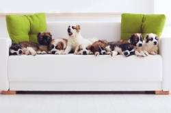 [Weekender] Pet care industry thrives with creative services