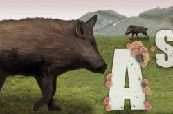S. Korea to raise guard against African swine fever, hunt more wild boars