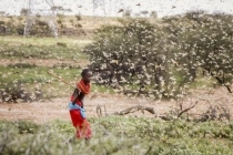 S. Korea to provide US$4m in aid to 14 countries hit by locust swarms