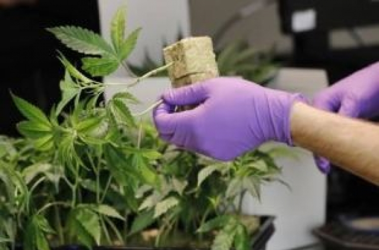Imports of medical cannabis to be allowed next month
