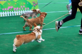 Korea moves to toughen law over negligent dog owners