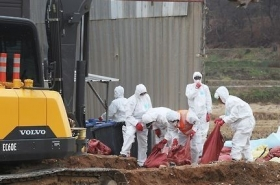 Suspected bird flu case confirmed to be highly pathogenic