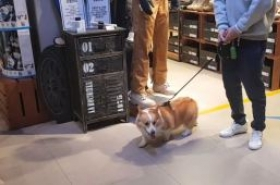 [Video] Mall, shops start to open doors to dogs
