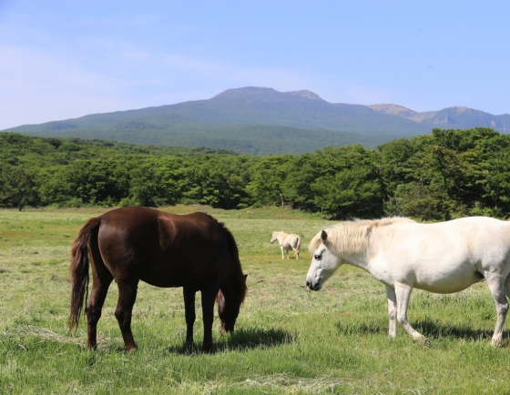 [Photo News] Jeju horses bask in sunlight