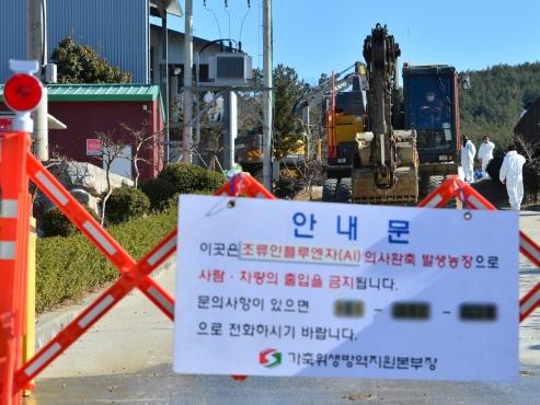 S. Korea investigating new suspected case of bird flu, caseload now at 102