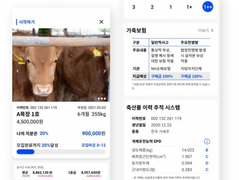 From cows to Rolex, young investors in Korea eye new alternative investment