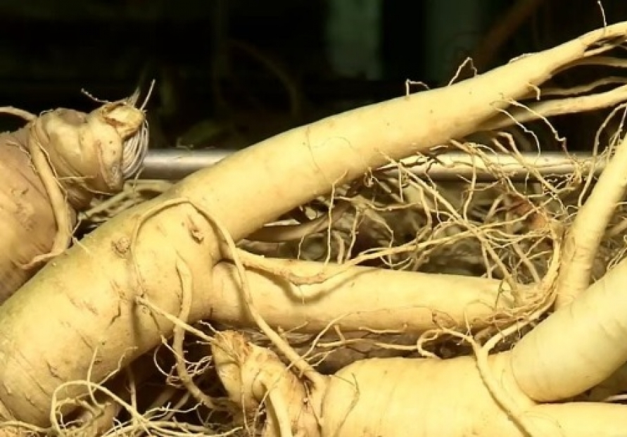 S. Korea's exports of ginseng set new record in 2019
