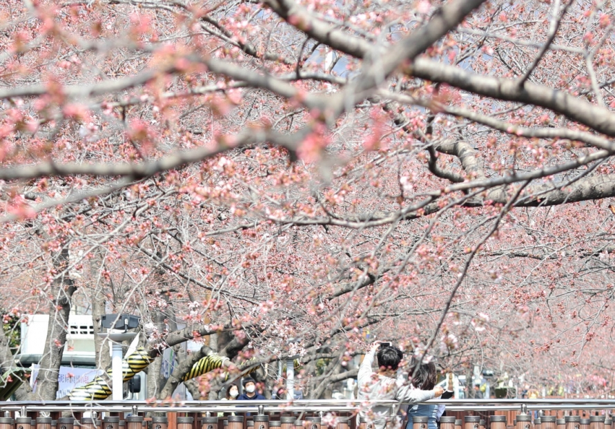 [Newsmaker] Spring flower festivals say 'No' to visitors
