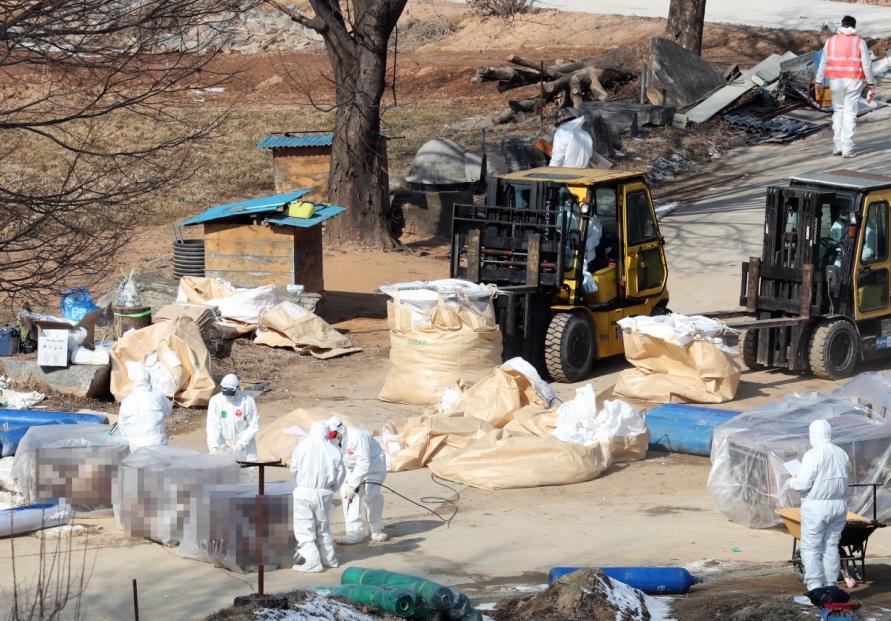 S. Korea investigating new suspected bird flu case, total now at 101