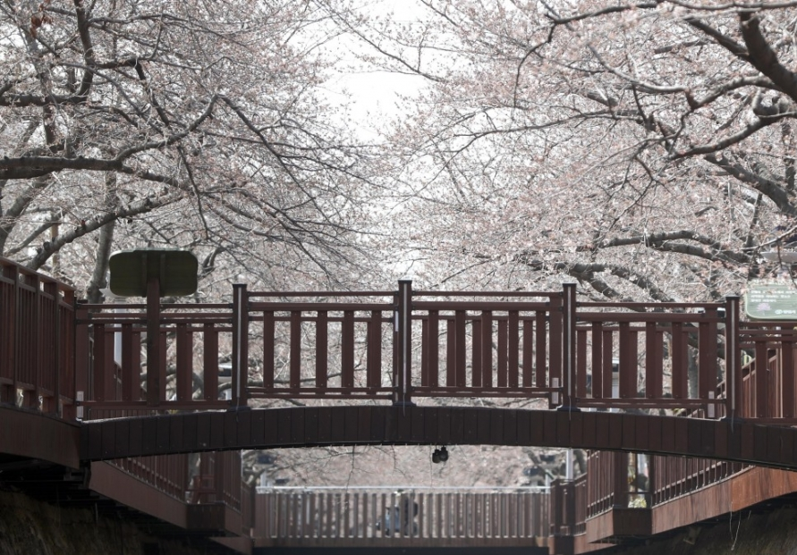 [Photo News] Spring, the season of flowers, blooms in Korea