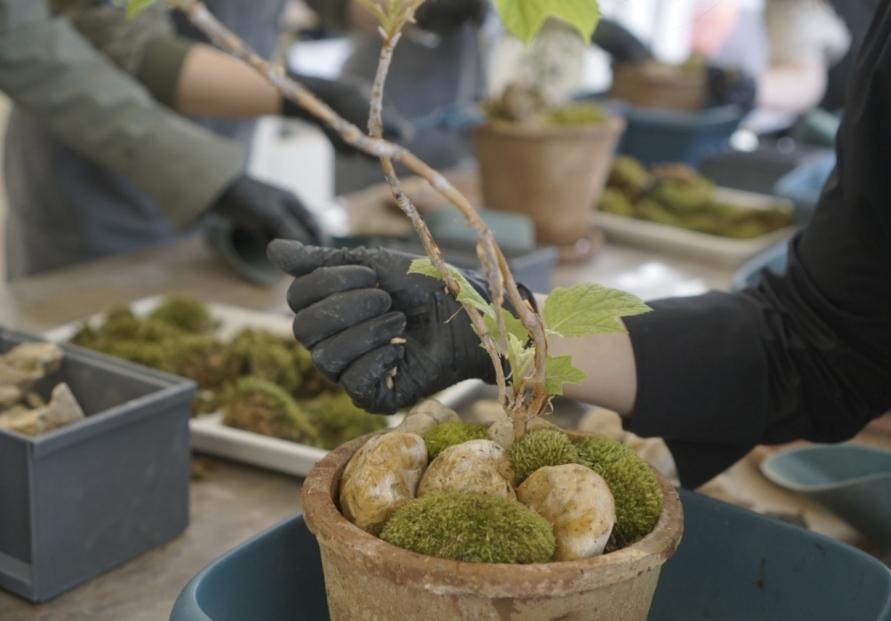 Gardening blossoms in COVID-hit Korea