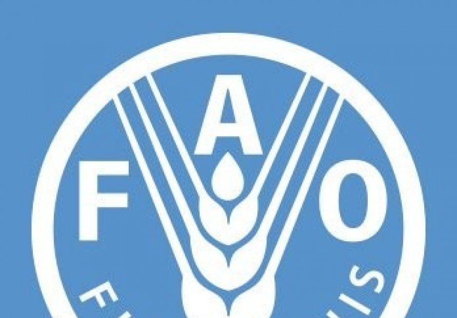 S. Korea picked as member of FAO's council for 12th time