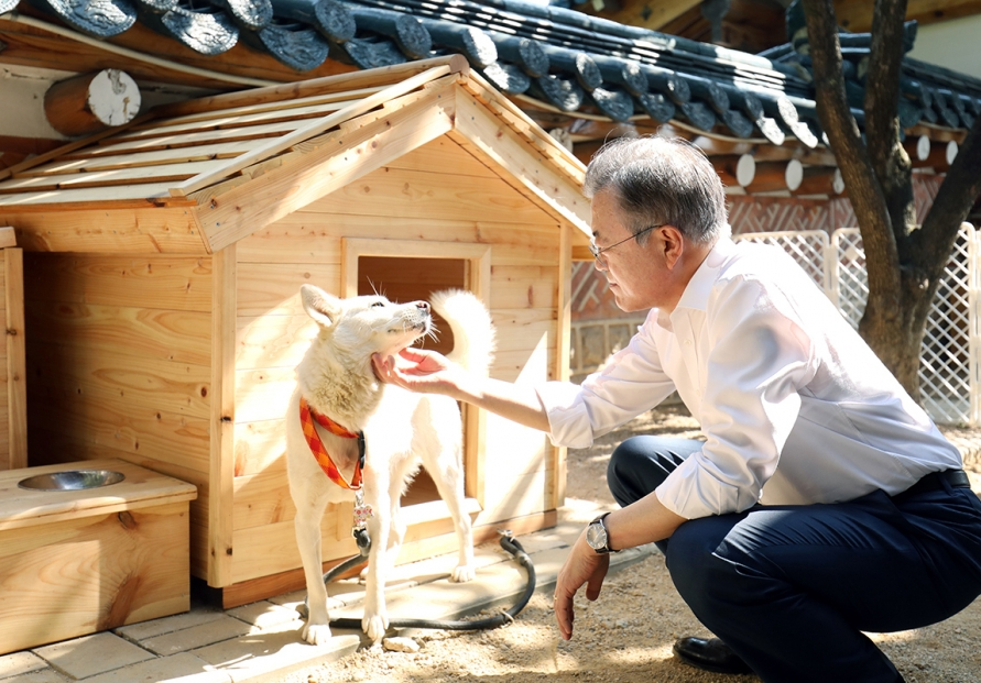 Time to review banning dog meat: Moon