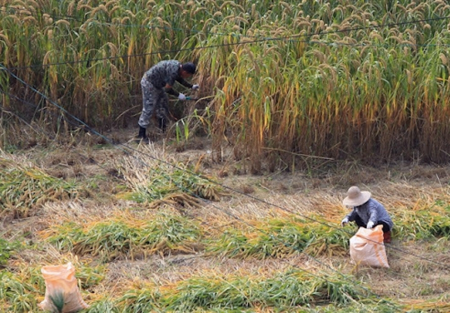 Number of farmers, fishermen continues to fall in S. Korea