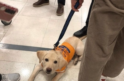 Lotte Mart apologizes for turning away guide dog in training