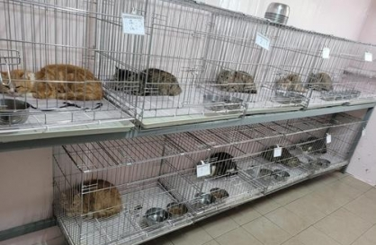 Landlord who reported tenant for abandoning 14 cats turns out to be their owner