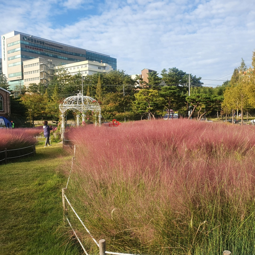 Pink muhly grass surrounds Pohang City Hall