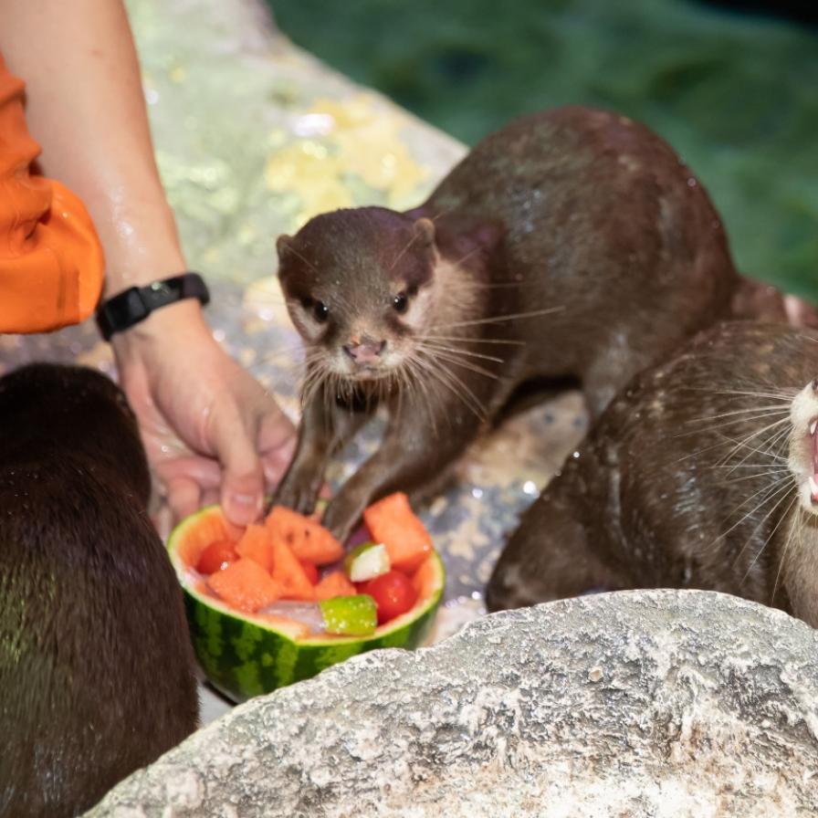 Marine animals brace for hot summer season