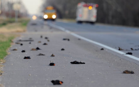 Mystery over dead birds in U.S. sparks wild speculations