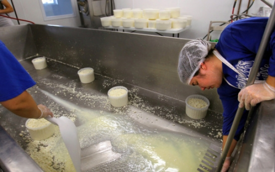 Dairy farmers switch focus to artisanal cheese