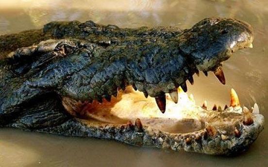 Phone keeps ringing in Ukrainian crocodile's tummy